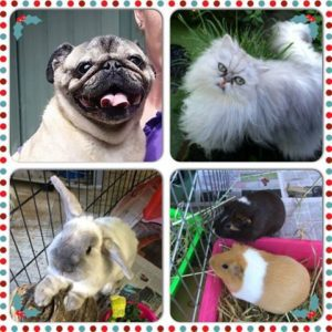 sydney pet boarding dogs cats rabbits guineapigs