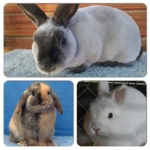 sydney pet boarding rabbits