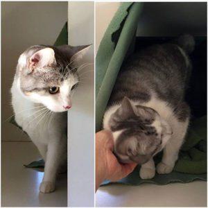cat accommodation sydney