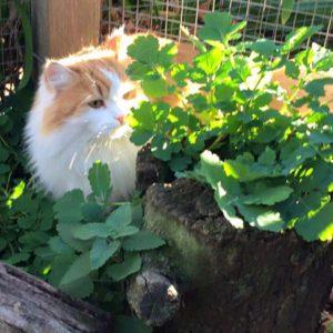terrey hills cat boarding