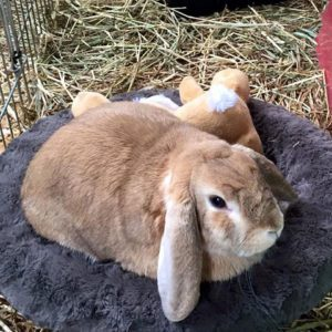 we look after your bunny when you go on holidays
